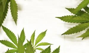 Cannabis - Marihuana y La ley en Chile